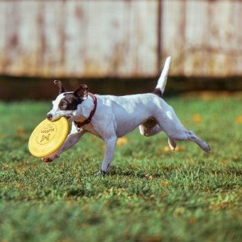 pet treats savory prime pet treats bones rolls healthy treats safe rawhide