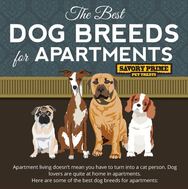 Best Apartment Pets: The Best Dog Breeds For Apartment Living
