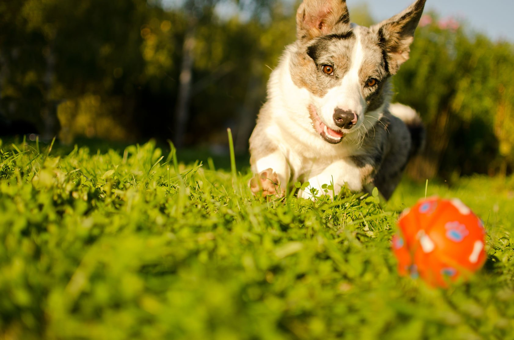 10 Ways To Protect Your Pet Against Fleas & Ticks