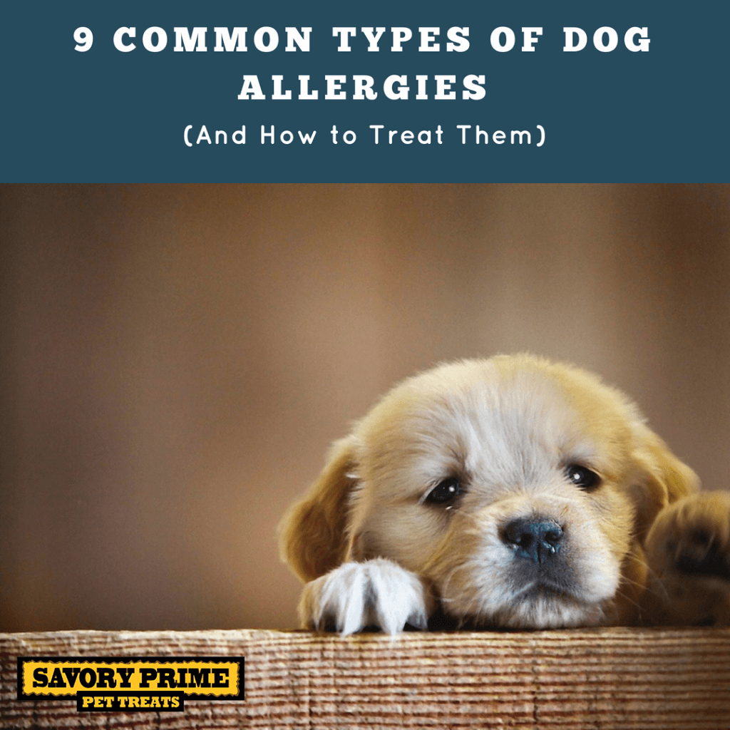 9 Common Types Of Dog Allergies (And How To Treat Them