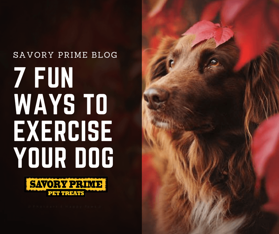 Can You Give Your Dog Rawhide Treats