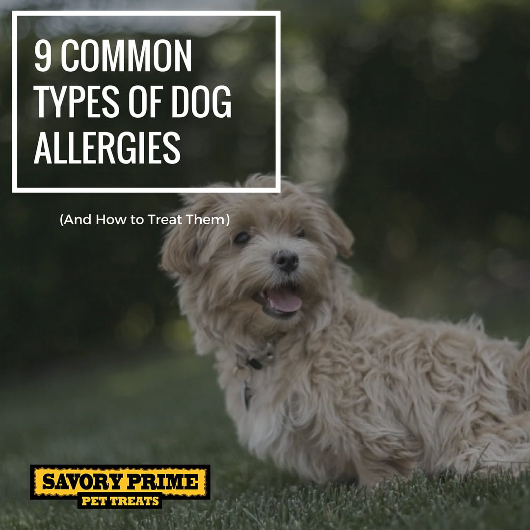 Prescription Dog Food For Allergies