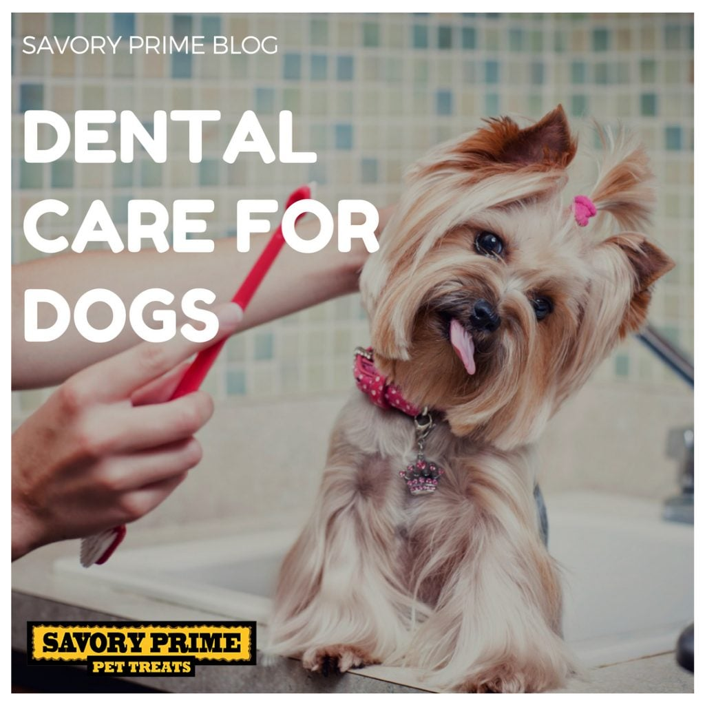 Dental Care for Dogs | Savory Prime Pet Treats