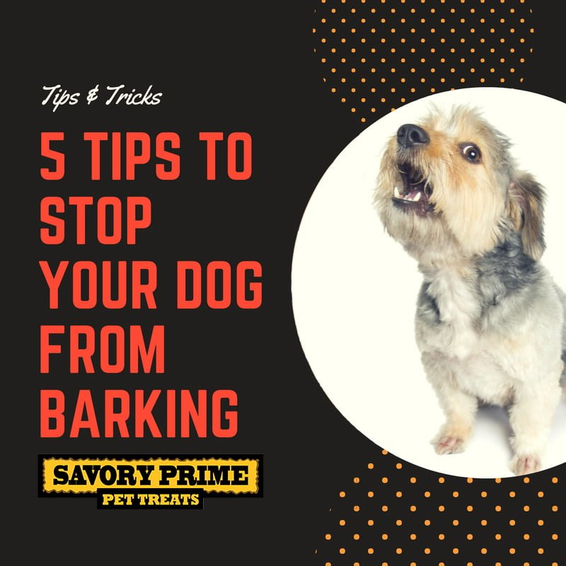 how to get your neighbours dog to stop whining