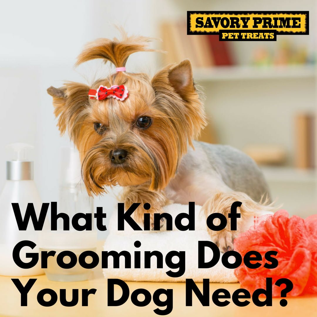 What kind of grooming does your dog need savory prime for What a dog needs