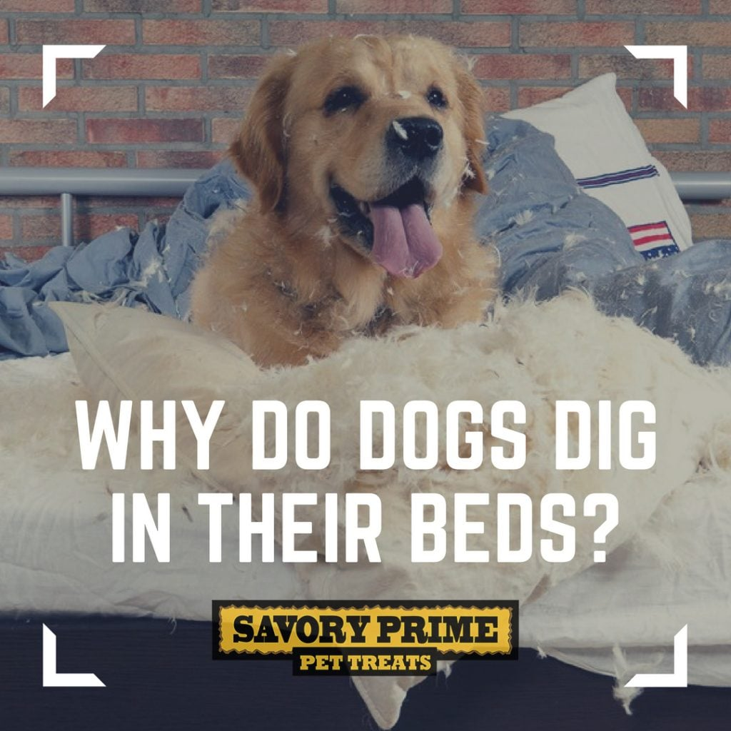 Why Do Dogs Like To Dig The Bed