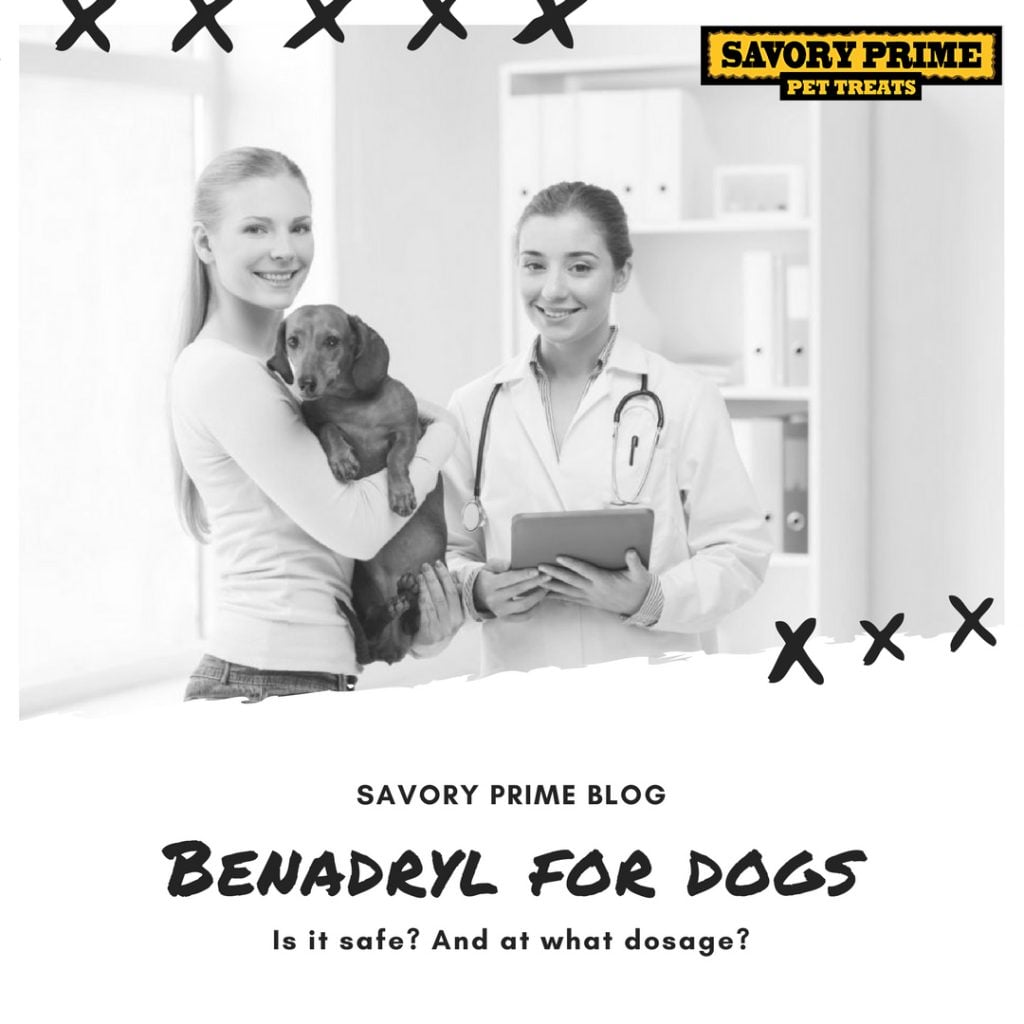 Benadryl for Dogs: Is it safe? And at what dosage? | Savory