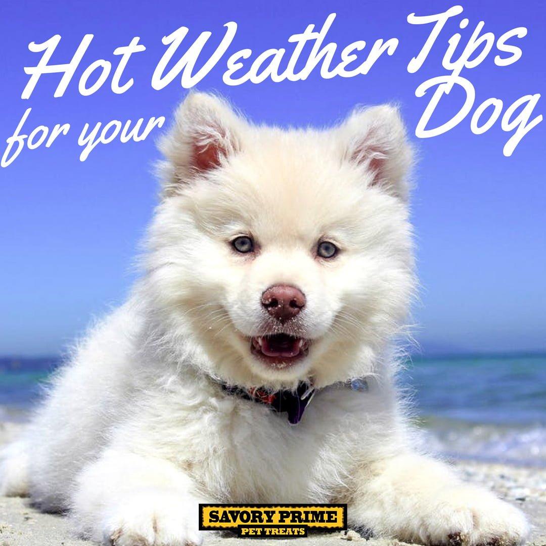 Dog Diarrhea Hot Weather