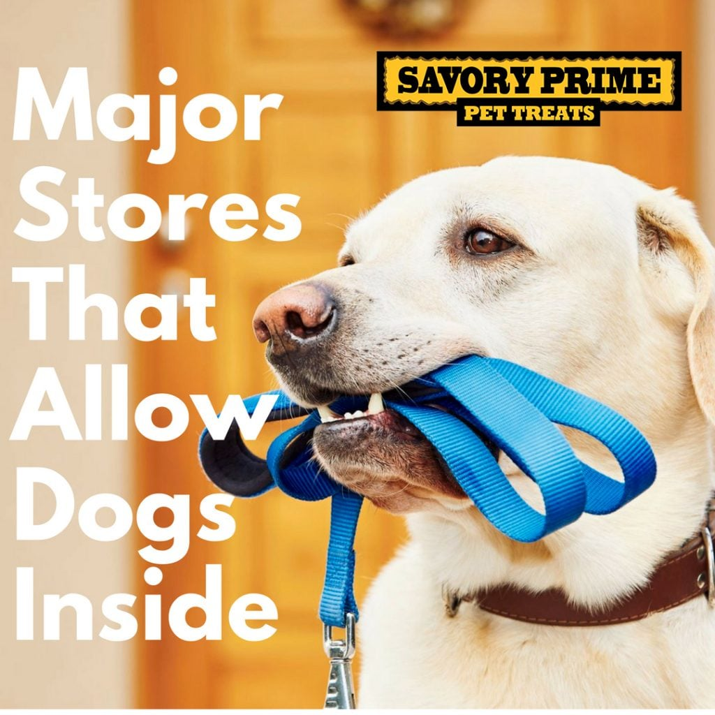 Major Stores That Allow Dogs Inside (Pet-Friendly Policies) | Savory
