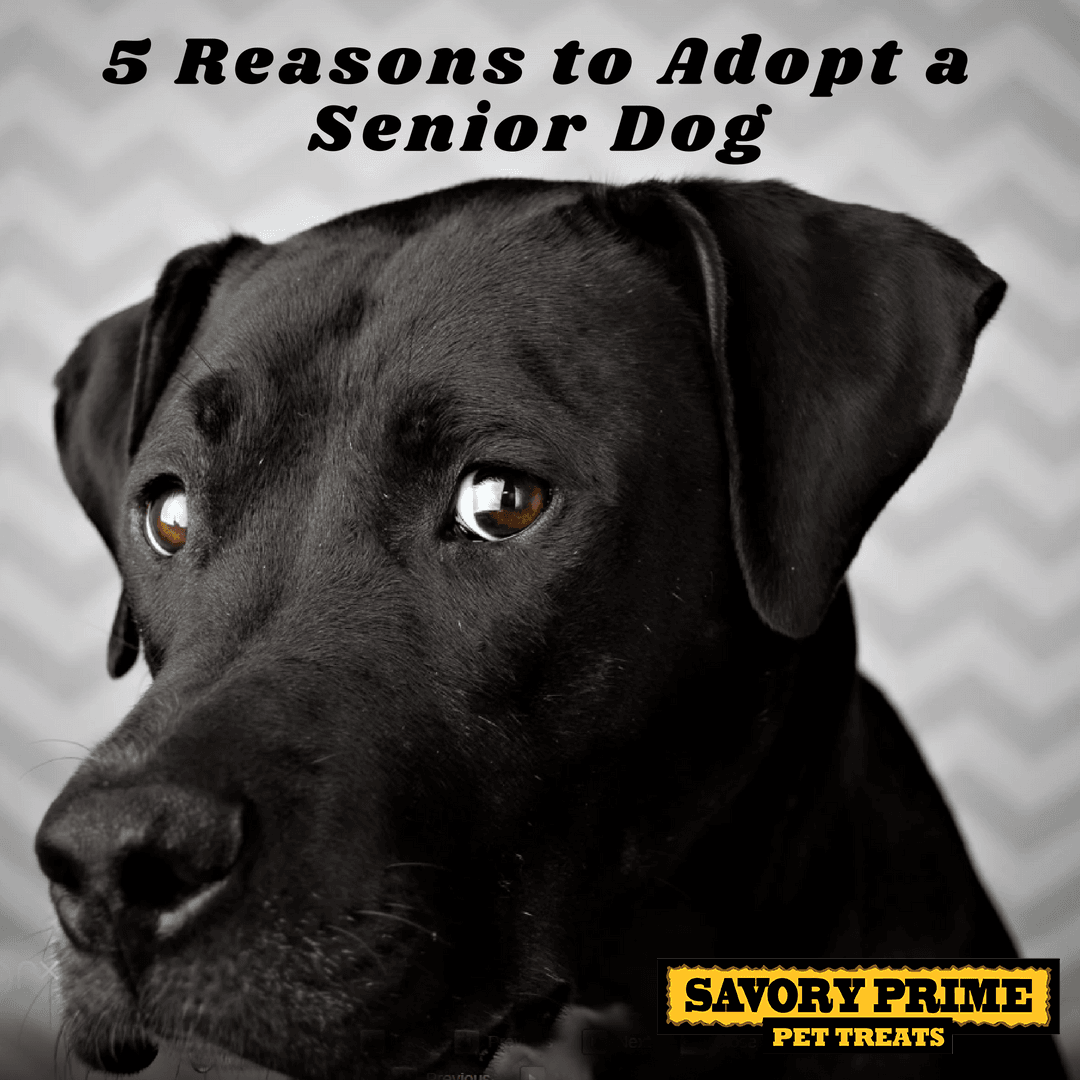 Should I Adopt A Puppy Or Older Dog