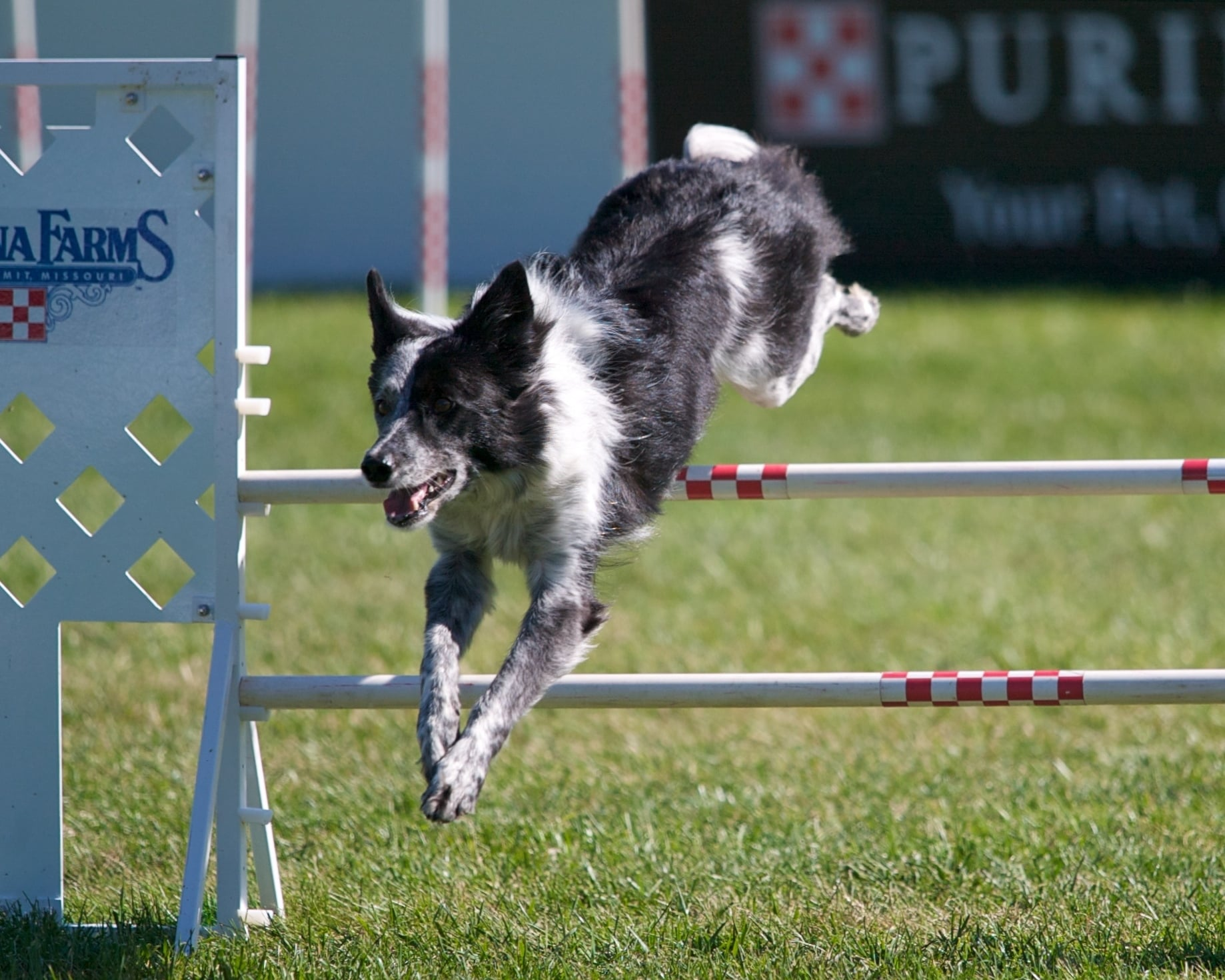 Dog Agility Training Obstacles