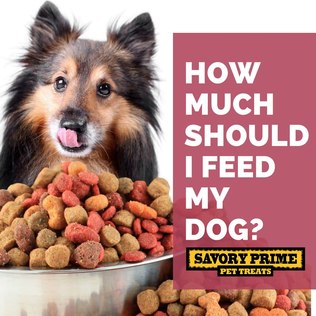 How Much Raw Food Should My Dog Be Fed