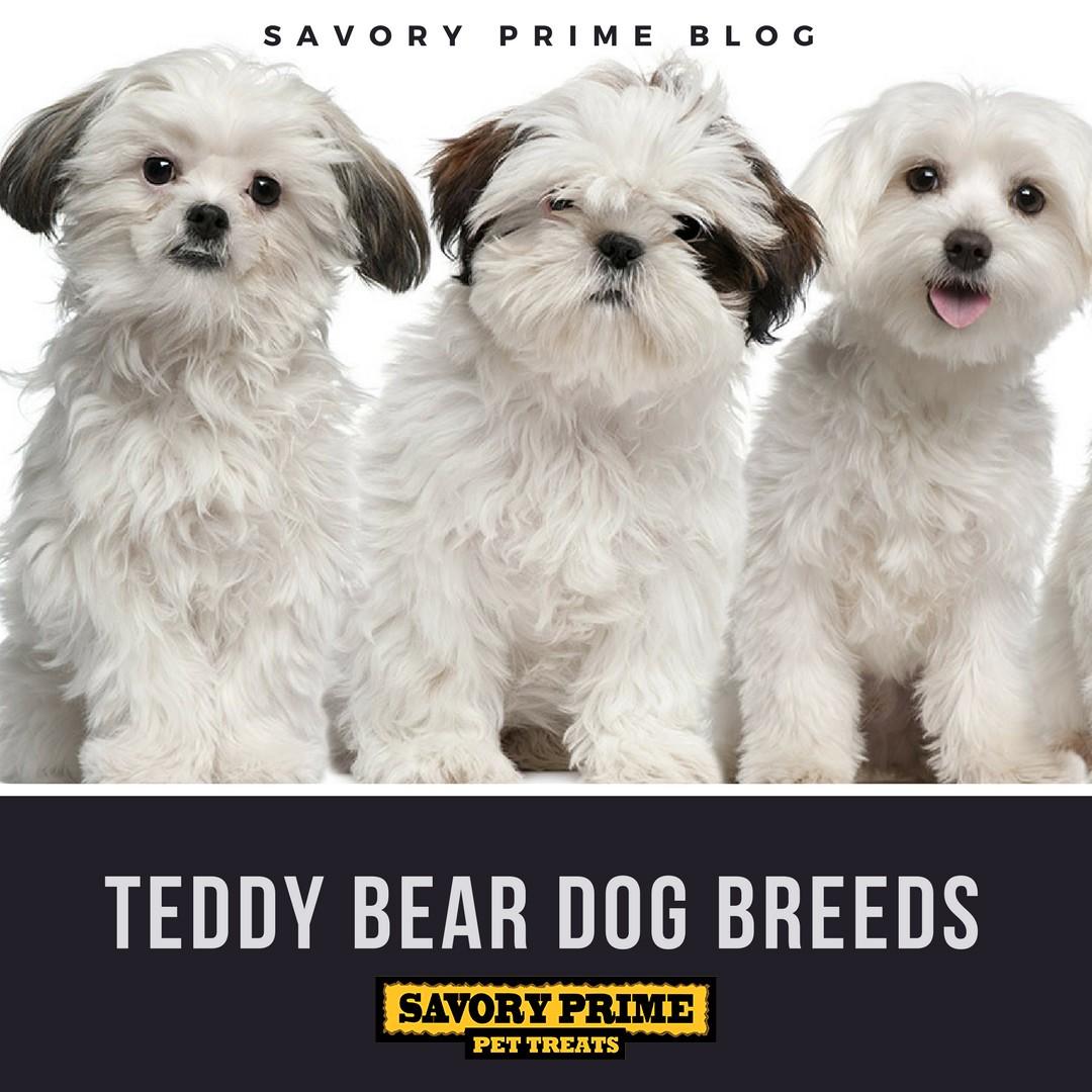 Teddy Bear Dog Breeds Savory Prime Pet Treats