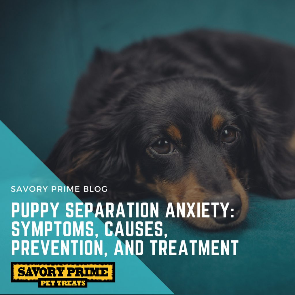 What is the plague. Symptoms of pigs in dogs and methods of treatment