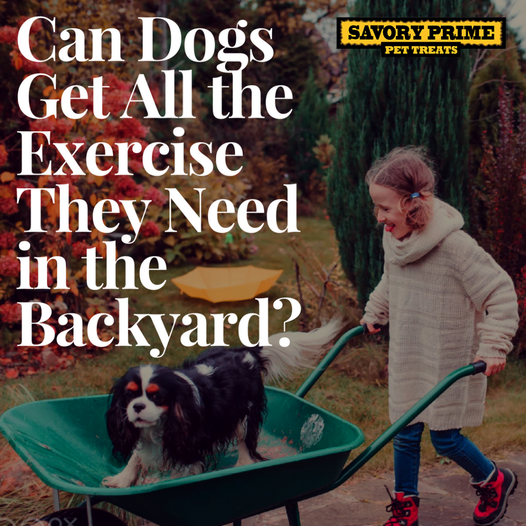 Backyard Dogs can dogs get all the exercise they need in the backyard? | savory