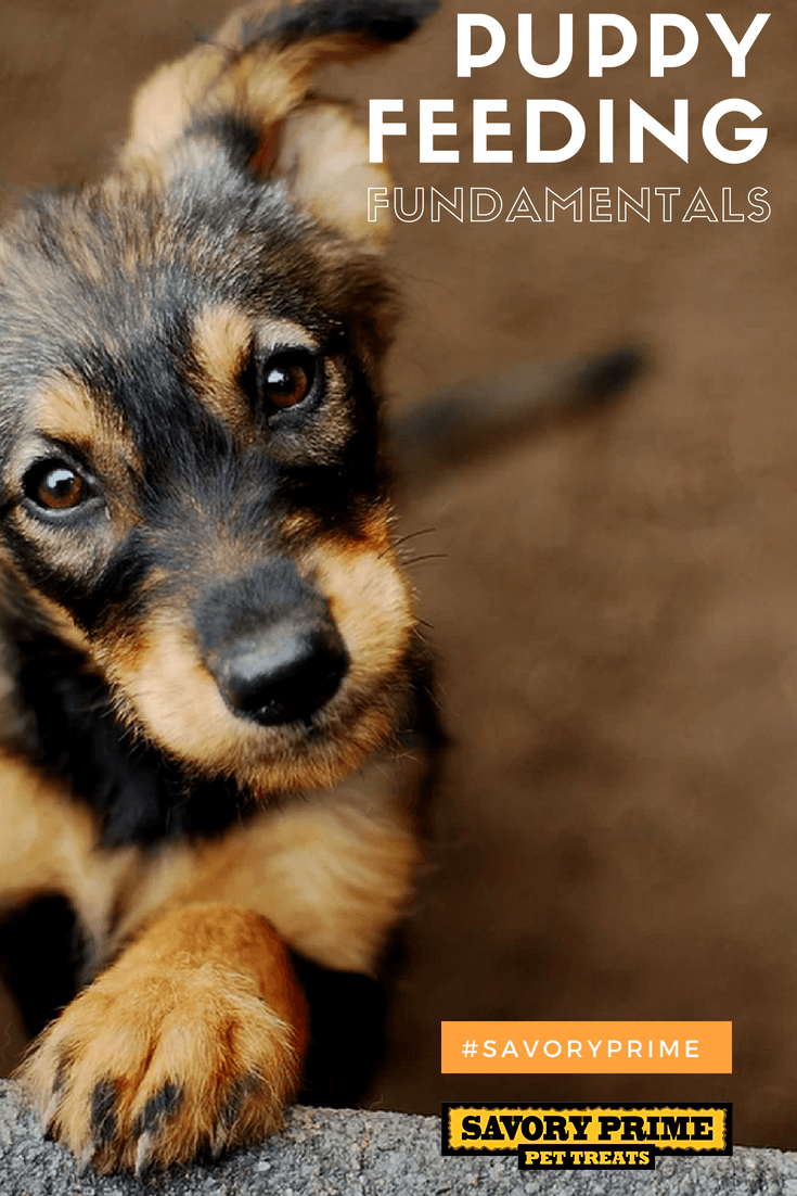 Can Anxiety Cause Constipation In Dogs
