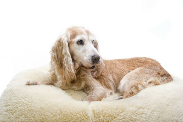 Rimadyl For Dogs Uses Side Effects Amp Alternatives