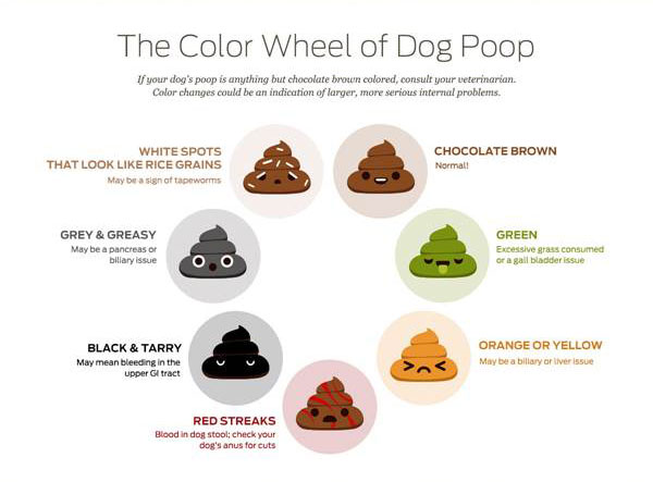 Poop Infographic2 Savory Prime Pet Treats
