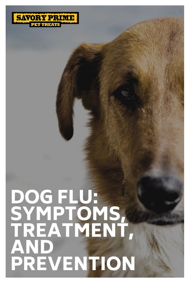 Dog Flu Vaccine Name