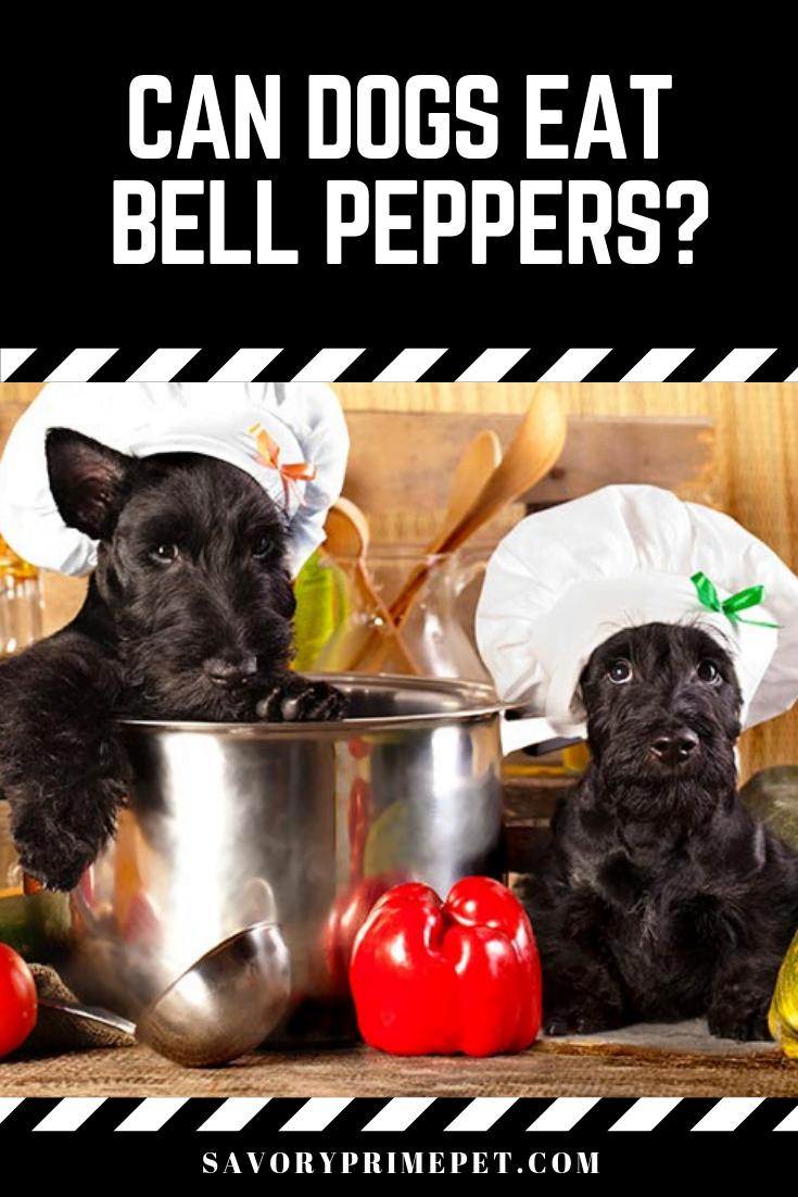 Can Dogs Eat Garlic Salt