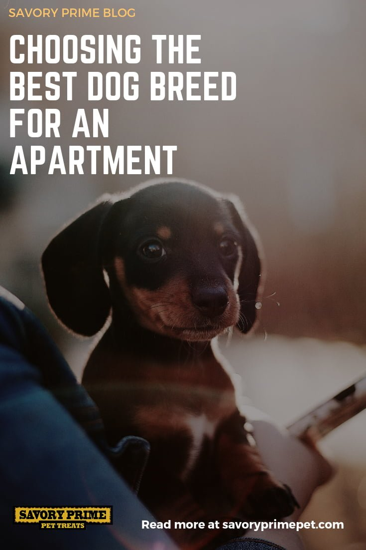 Stay Tuned Tomorrow For An Article On The Best Feline Breeds Apartment Living Spoiler Despite Conventional Wisdom Not All Are Ideal Indoor Dwellers