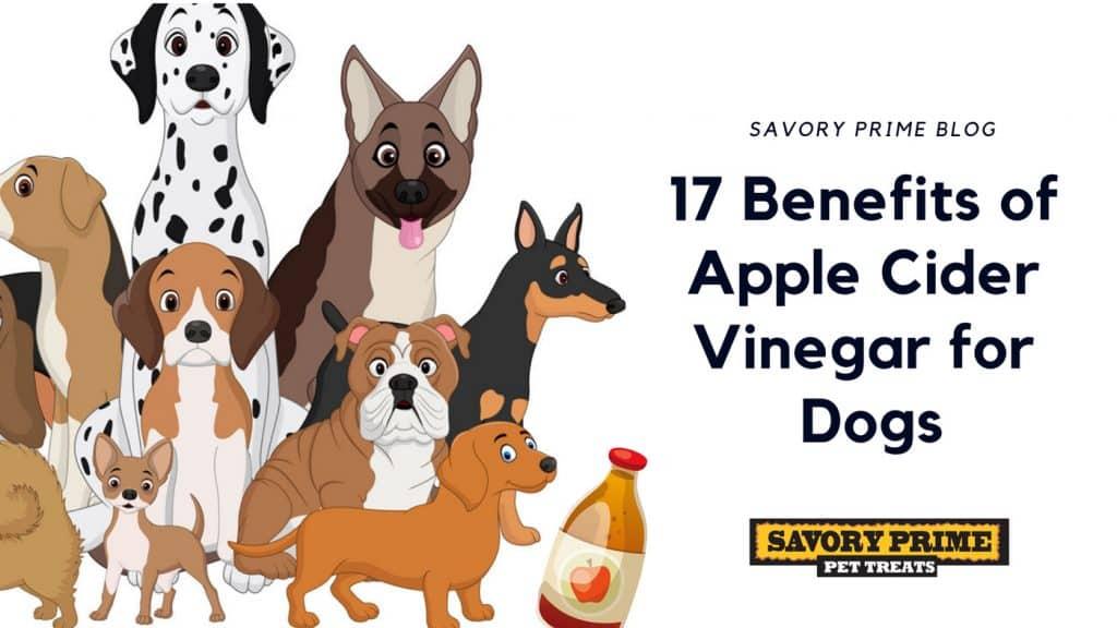 17 Benefits of Apple Cider Vinegar for Dogs