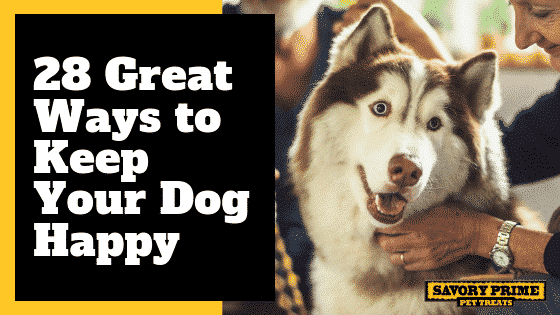 28 Great Ways to Keep Your Dog Happy - Savory Prime