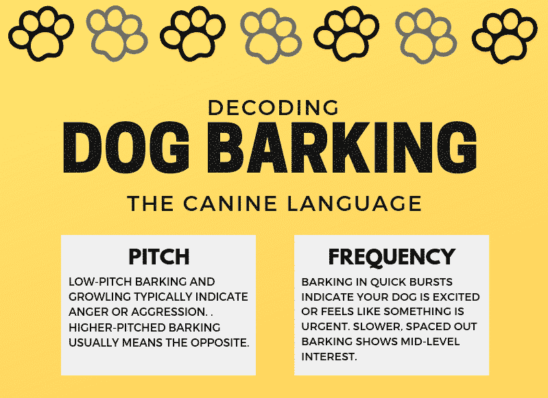 The Meaning of Your Dog's Barks: Decoding The Canine Language
