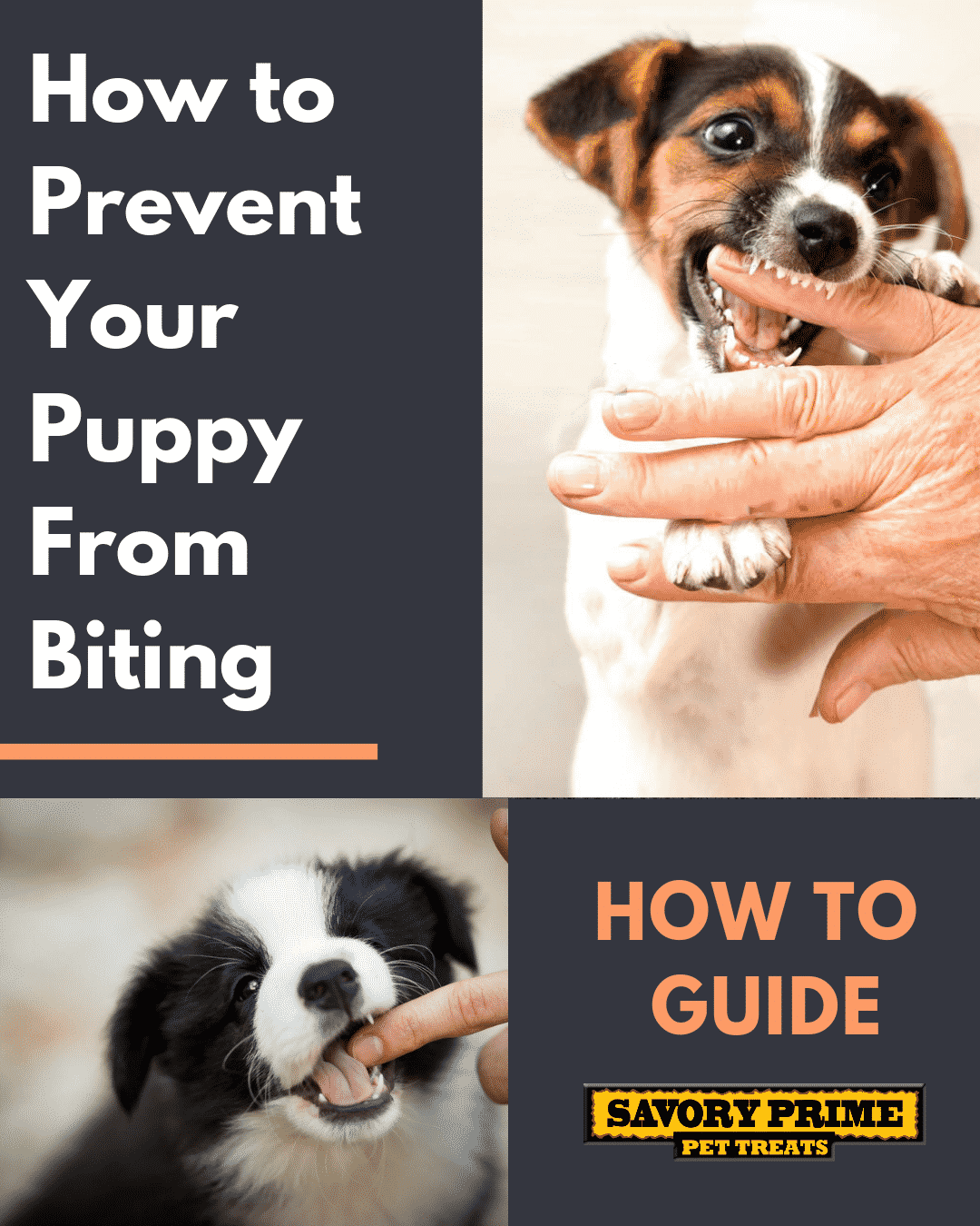 how to prevent your puppy from biting